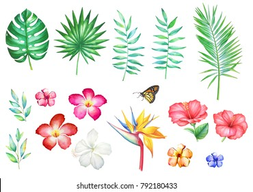 Set of watercolor hand drawn tropical flowers and plants isolated on white background.