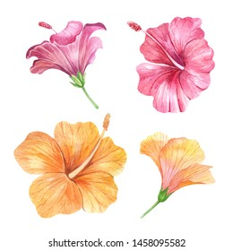 Set of Watercolor hand painted tropical flowers, hibiscus. Bright jungle exotic clip art perfect for summer wedding invitation and party card making
