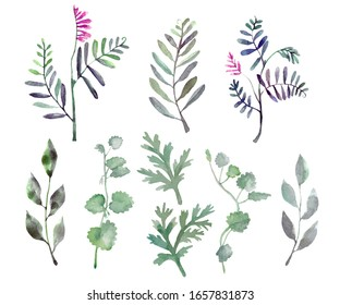 Set with watercolor herbs. Hand-drawn leaves and branches, flowering plants. Isolated on a white background