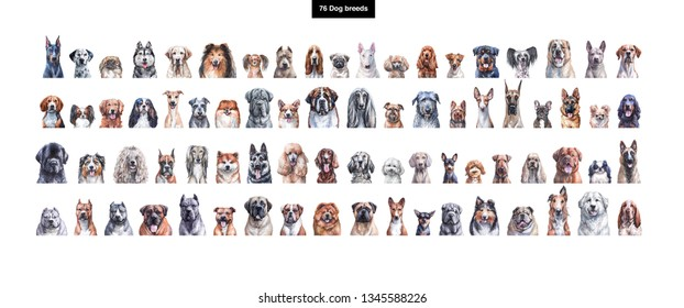 Set of watercolor illustrations of 76 dog breeds
