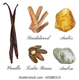 Set of watercolor illustrations of basic perfume notes: vanilla, tonka beans, ambra, sandalwood