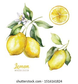 Set of watercolor illustrations of lemons. Hand painted tree branch  ripe lemons with green leaves on white background for your design.