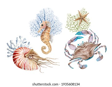 set of watercolor illustrations in marine style isolated on white background. hand-painted marine life crab, coral and shellfish