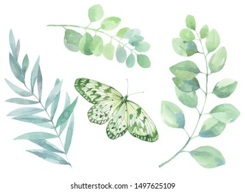 Set of watercolor illustrations. Picture of green sprigs of eucalyptus and the other with a butterfly.