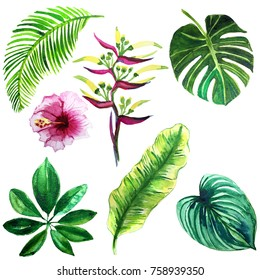 set of watercolor illustrations of tropical leaves and flowers