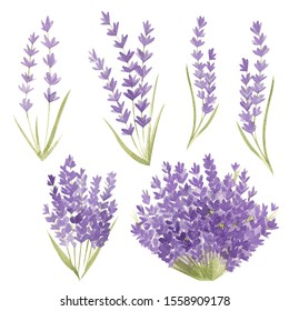 Set of watercolor isolated elements. Provence, lavender, bouquet. Suitable for postcards, invitations, stickers.