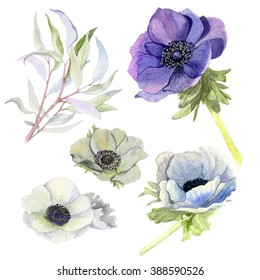 Set of watercolor leaves, anemones, flowers, branches. Design elements for patterns, wreath,  and compositions, greeting cards, wedding invitations. Real watercolor painting.