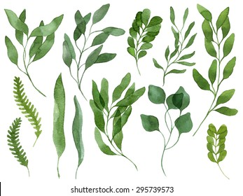 A set of watercolor leaves, berries, fern and branches. Design elements to make your own patterns, laurels and compositions. Great for wedding or invitations in floral style. Real watercolor