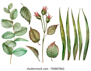 Set of watercolor leaves, hand drawn illustration of floral elements isolated on white background, can be used for greeting card and invitation.