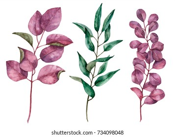 Set of watercolor leaves, hand painted illustration of floral elements isolated on a white background, can be used for greeting cards and invitations.