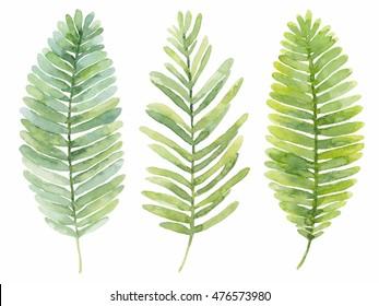 Set of watercolor leaves. Summer fern leaves. Illustration.