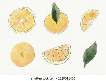 Set of watercolor lemon. Digital painting