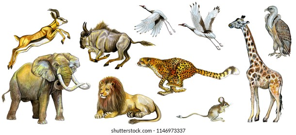 Set of watercolor painted african animals isolated on white.