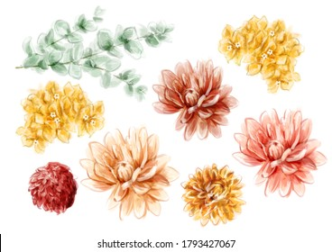 Set watercolor painted bohemian flowers and eucalyptus leaves isolated on white background