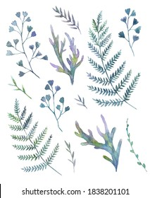 Set with watercolor painted ferns isolate on white background.