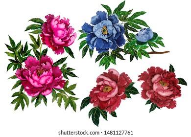Set of watercolor peonies.  Chinese art.