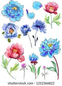 Set of watercolor peony. Wildflower peony flower in a watercolor style isolated. Full name of the plant: blue peony. Aquarelle wild flower for background, texture, wrapper pattern, frame or bord