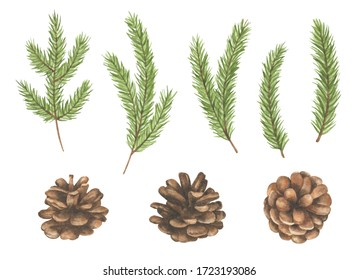 Set of watercolor pine cones and branches isolated on white background. Perfect for cards and invitations.