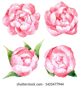 Set of watercolor pink peonies and buds. Leaves and flowers peony. Summer decoration print for wrapping, wallpaper, fabric.
