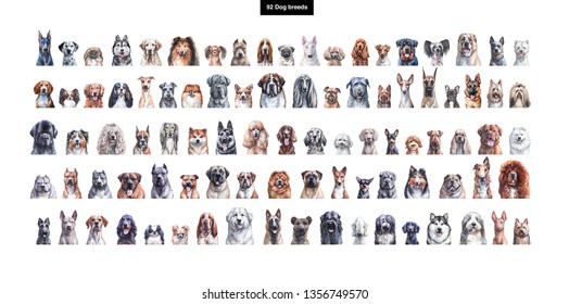 Set of watercolor portraits of 92 dog breeds