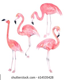 Set watercolor random flamingos. Isolated illustration