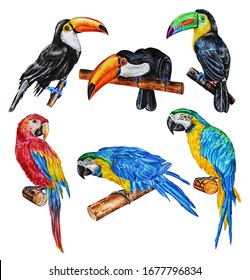 Set of watercolor realistic tropical birds isolated on a white background. Red and blue macaw parrots and toucans. Hand drawing.
