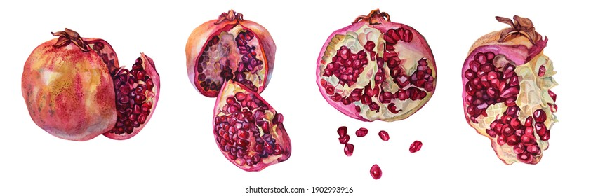 Set watercolor red garnet hand-drawn pomegranate with seeds isolated on white background. Art creative object for menu, textile, card, sticker, wallpaper, wrapping