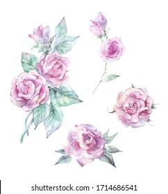 set of watercolor rose buds watercolor art 2