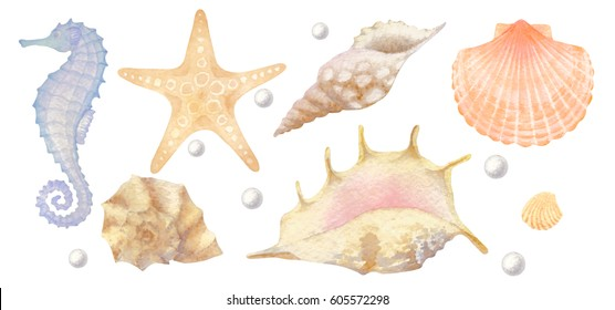Set of watercolor sea elements: seashells, starfish, seahorse, pearl.