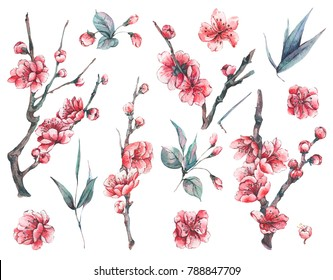 Set of watercolor spring nature  floral elements, separately sprigs leaves flower, pink blooming branches cherry, peach, pear, sakura, apple trees, isolated botanical watercolor illustration