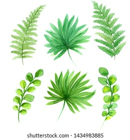 Set of watercolor tropical green leaves. Isolated on white background. Hand painted illustration can be used for logo, wallpaper, textile, polygraphy