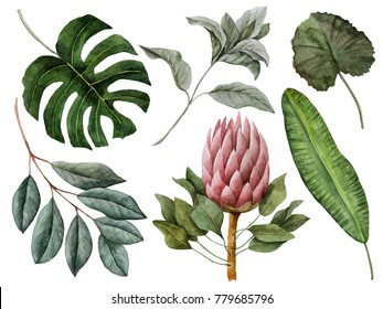 Set of watercolor tropical leaves, hand painted illustration of exotic floral elements isolated on a white background, can be used for greeting cards and invitations.