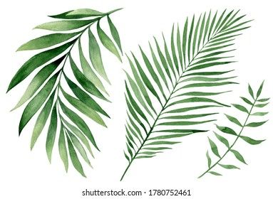set of watercolor tropical leaves on white background. Green palm leaves, monster, homeplants, banana leaves. Exotic plants. Jungle botanical watercolor illustrations, floral elements.