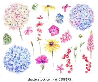 Set of watercolor vintage floral design elements of blooming hydrangea, wildflowers, meadow herbal, chamomile. Botanical natural hydrangea Illustration isolated on white