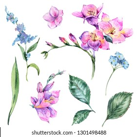 Set of Watercolor Vintage Floral Elements Blooming Freesia and Garden Flowers, Botanical Natural Collection Isolated on White Background
