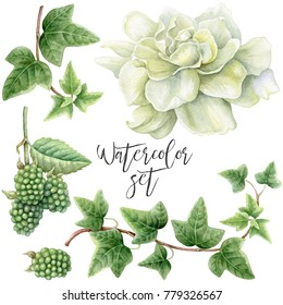 Set of watercolor white gardenia, green blackberry and green ivy.