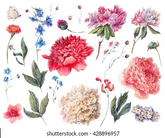 Set of watercolor white, pink, red peonies garden flowers separate flower, leaf sprigs, isolated watercolor illustration on white Natural watercolor summer design floral elements, botanical collection