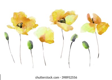 Set of watercolor yellow poppy.Bright colors watercolor background.