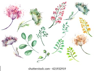A set of watercolors, flowers, twigs, grass, leaves, dried flowers. In vintage style, on an isolated white background
