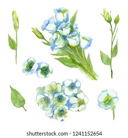 Set of White Singl Lisianthus and Lisianthus buds on a white background. Watercolor illustration.