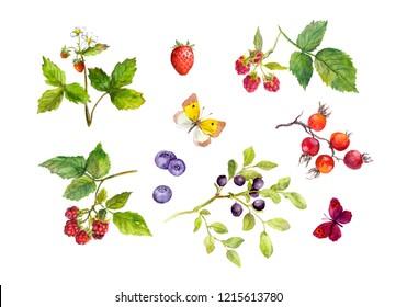 Set of wild berry - strawberry, raspberries, bueberries, blackberries. Also single berries and butterflies. Watercolor