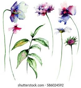 Set of wild flowers, watercolor illustration