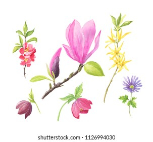 Set of wild spring and summer flowers. Watercolour illustration. Cherry blossom, hellebore, magnolia brunch and forsythia. Romantic background for web pages, wedding invitations