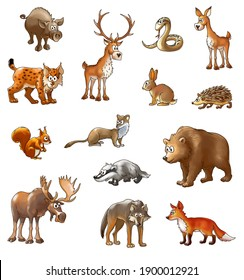 set of wild wood animals, color cartoon animals on a white background (with clipping path)