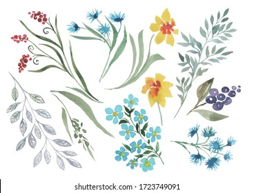 Set with wild yellow, blue flowers, branches with small flowering plants, berries and green leaves. Isolated elements on a white background for design. Watercolor.