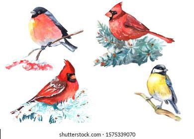 Set of  winter birds isolated on white background. Cardinal, Bullfinch, Blue Tit hand drawn illustrations.