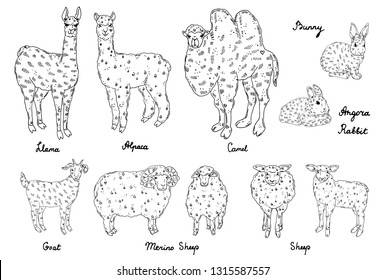 Set of wool animals, hand drawn illustration: llama, alpaca, merino sheep, angora rabbit, camel, goat