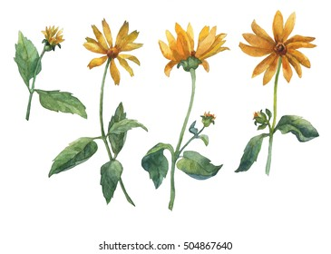 Set of yellow flowers. Watercolor hand drawn illustration isolated on white background.