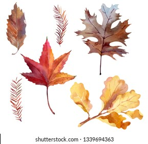 Set of yellow, ocher and red leaves: maple, oak and larch. Plants in november forest. Watercolor hand drawn illustration for your design. Isolated on white background