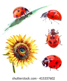 Set of yellow sunflower and ladybugs painted in watercolor. Isolated on white background.